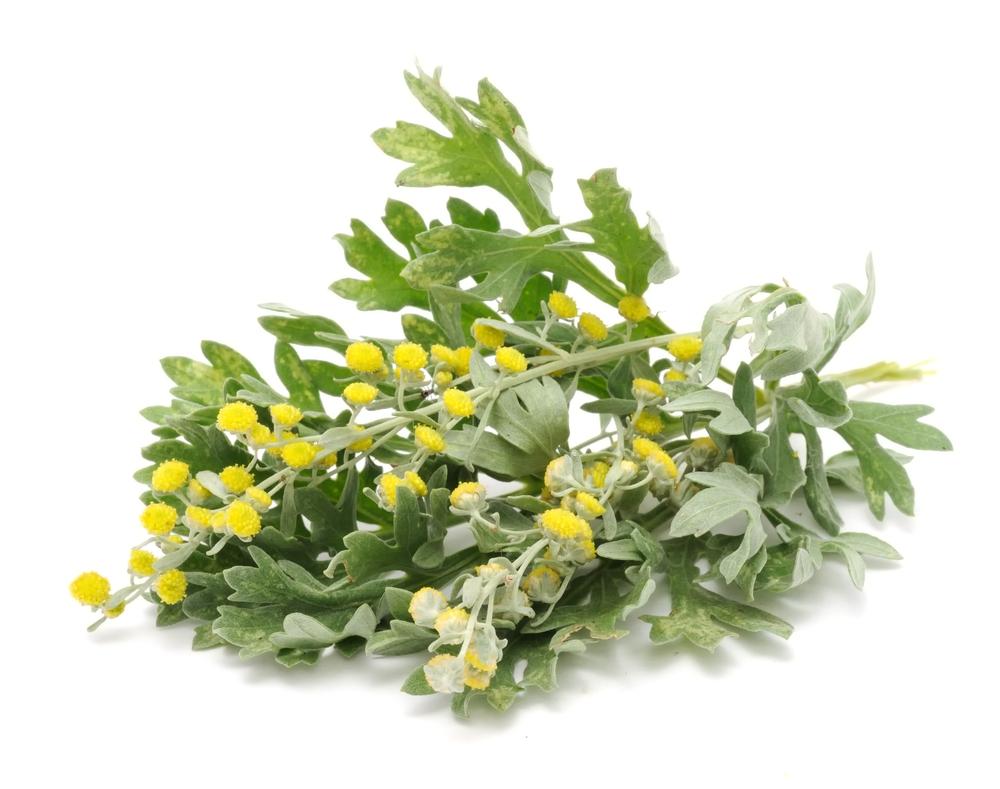Цветки полыни