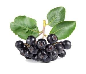 Настойка из черноплодной рябины на водке или спирту